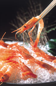 Northern Pink Shrimp